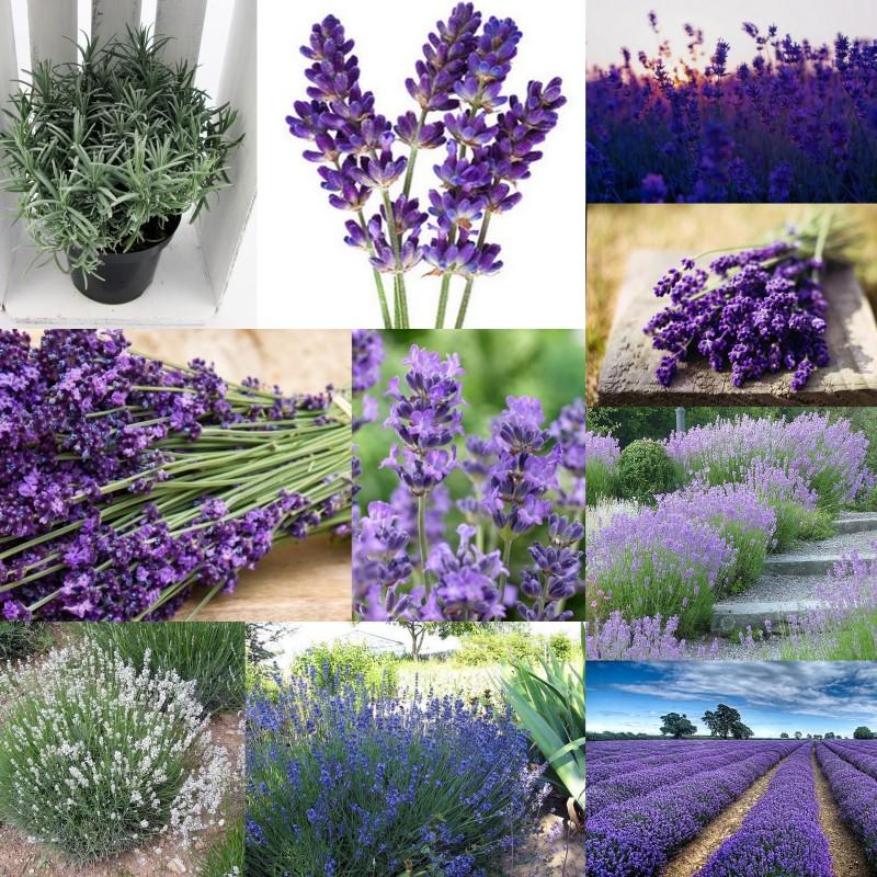 zdjęcia - rośliny