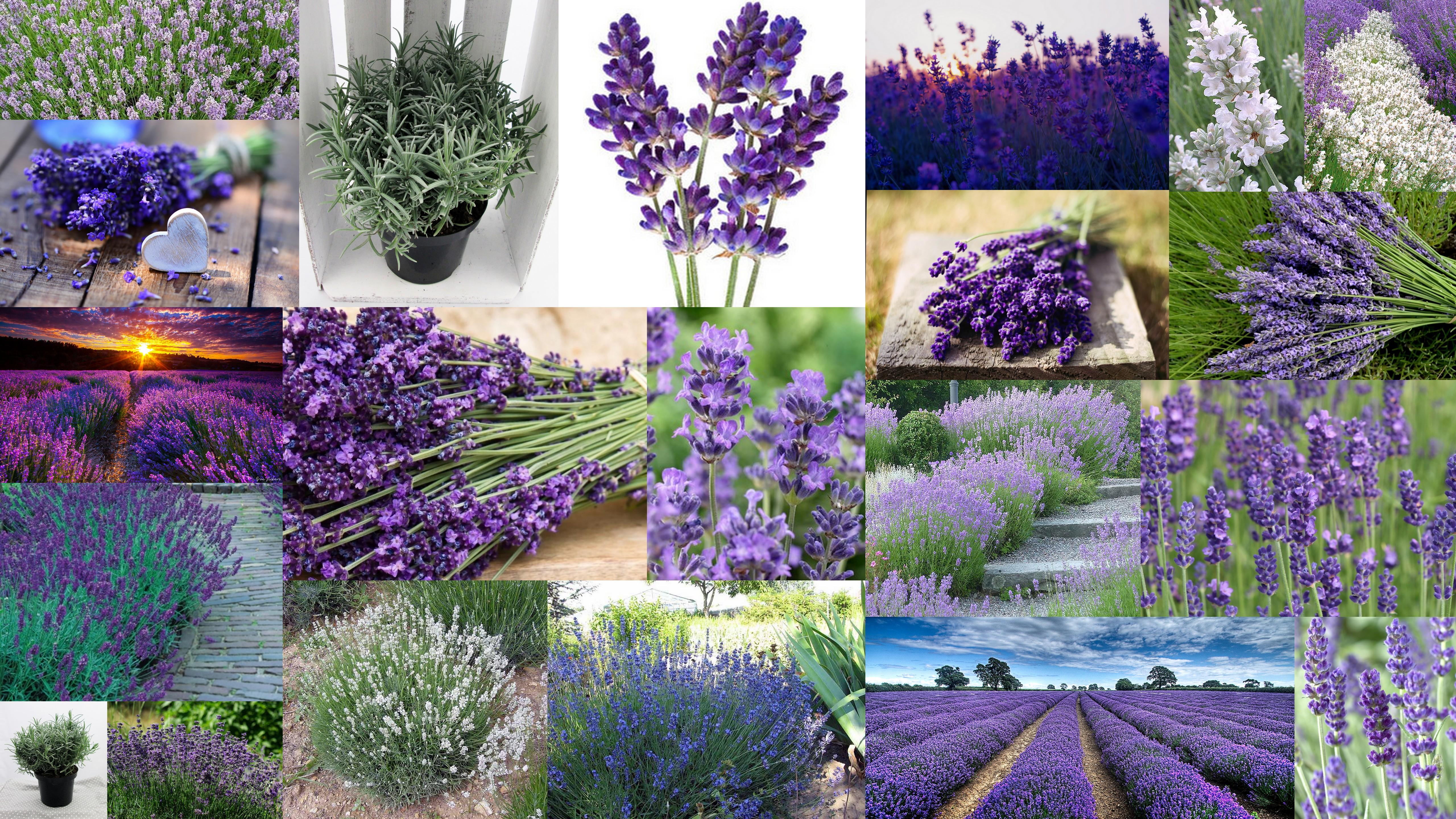 zdjęcia-rośliny