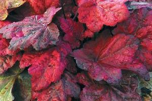 zurawka autumn leaves