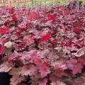 zurawka autumn leaves.3jpg