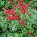 zurawka coral forest.1jpg