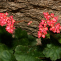 zurawka coral forest.3jpg